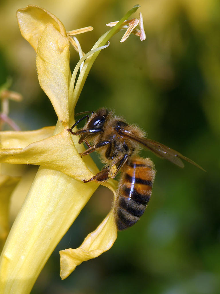 Post your dragonflies and bees/wasps-bee.jpg