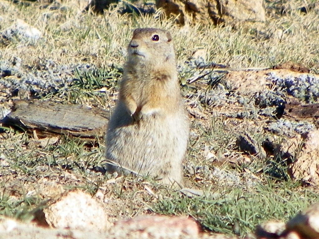 Post your Squirrel pictures-024fxsm.jpg