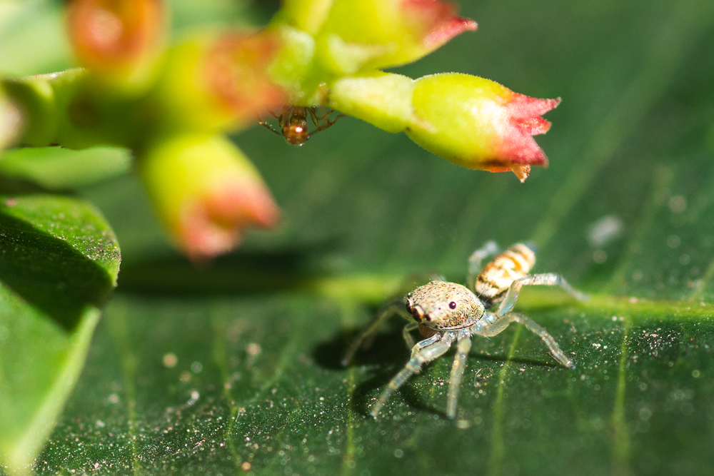 Post your spiders-shm_1074.jpg