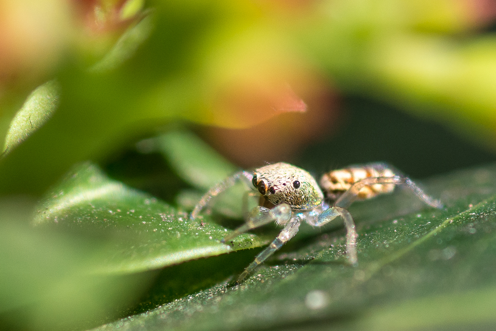 Post your spiders-shm_1094.jpg