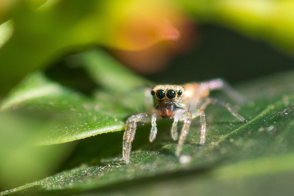 Post your spiders-shm_1099.jpg