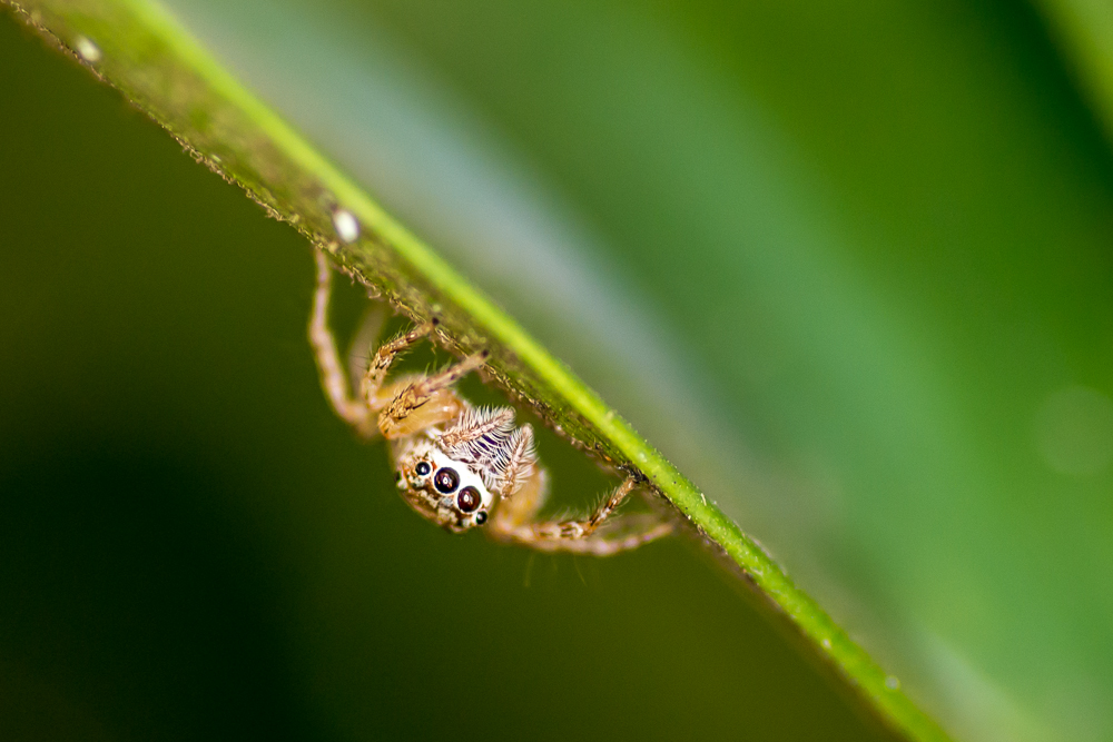 Post your spiders-shm_1125.jpg