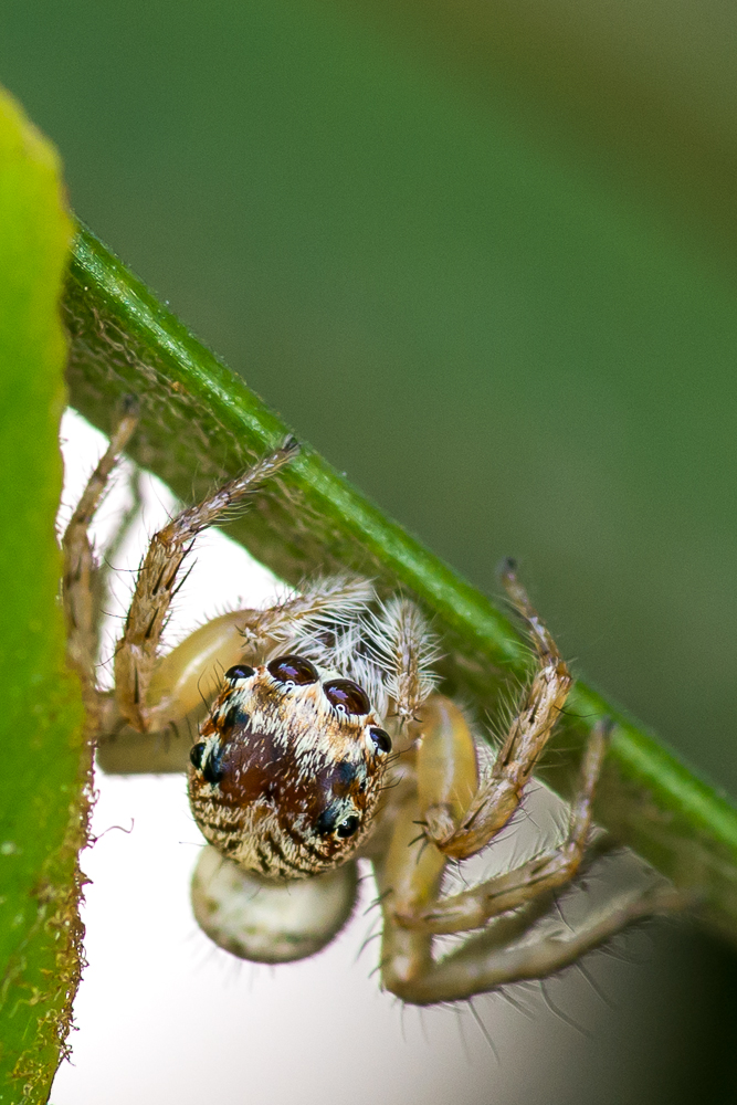 Post your spiders-shm_1127.jpg