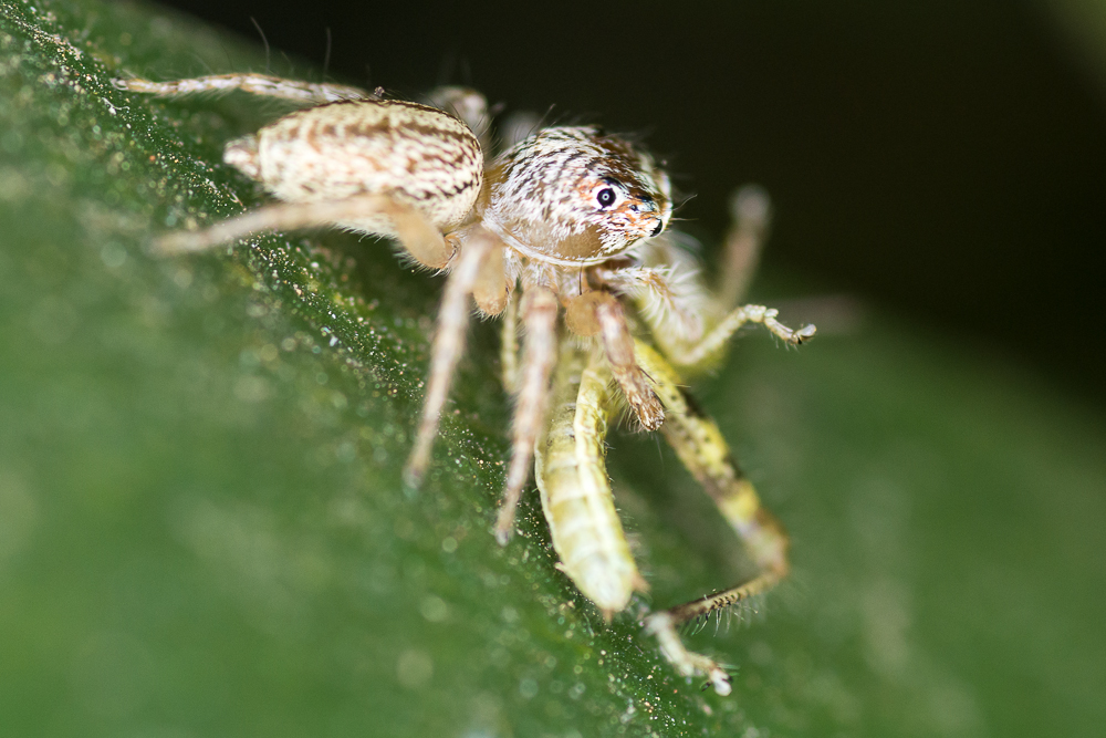Post your spiders-shm_1162.jpg