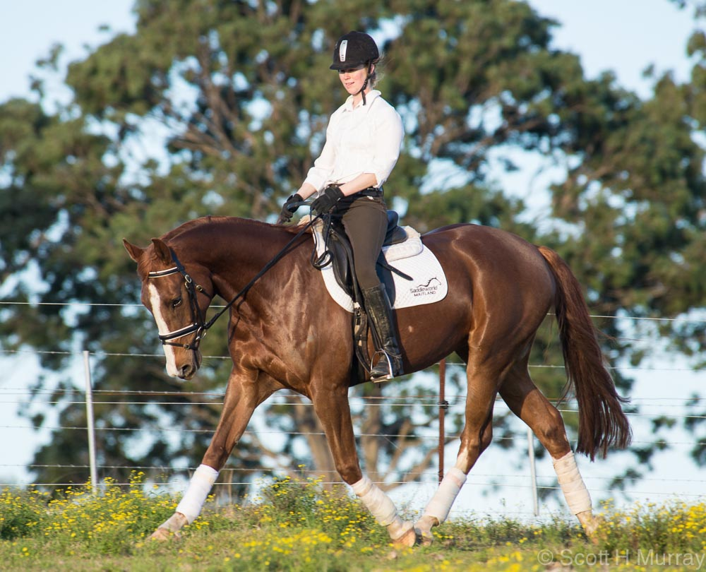 Post your Horse shots-46135d1375490419-1st-horse-photos-flash-small-1-2.jpg
