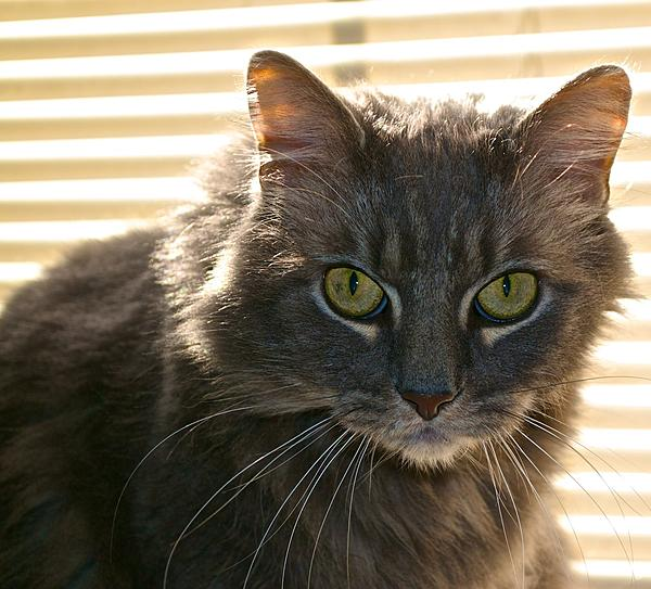 Up Close, And Personal-tabby-kat-2.jpg