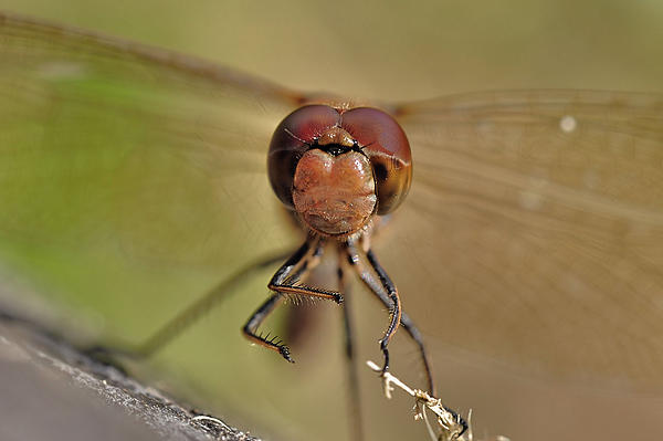 Up Close, And Personal-024.jpg