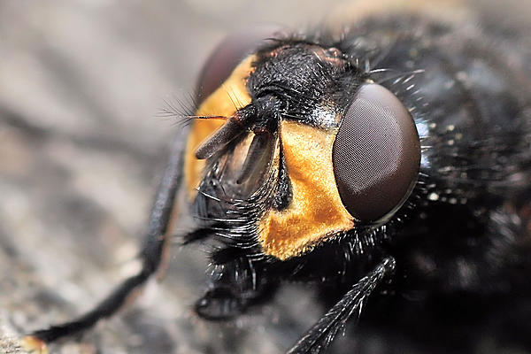 Up Close, And Personal-20111022_32.jpg