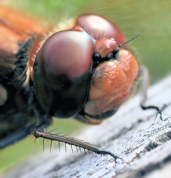 Up Close, And Personal-20111022_68.jpg
