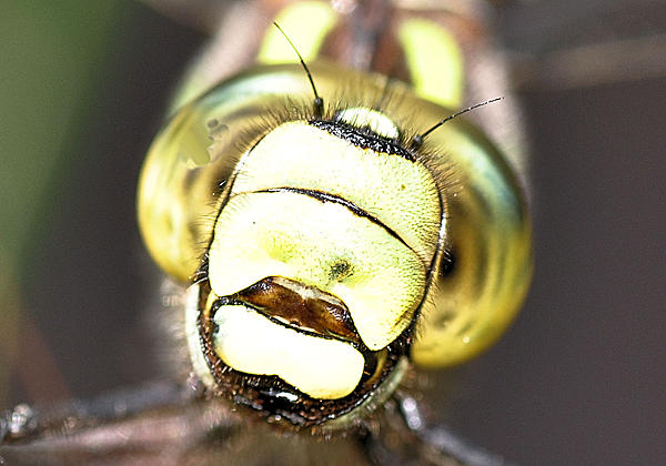 Up Close, And Personal-20111002_47.jpg
