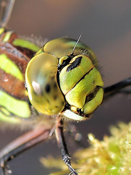 Up Close, And Personal-20111002_52.jpg