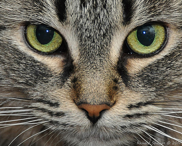 Up Close, And Personal-cat-1.jpg