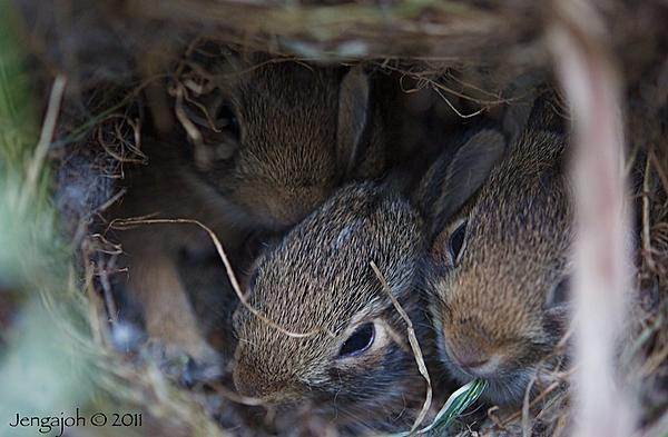 Up Close, And Personal-223-baby-bunnies.jpg