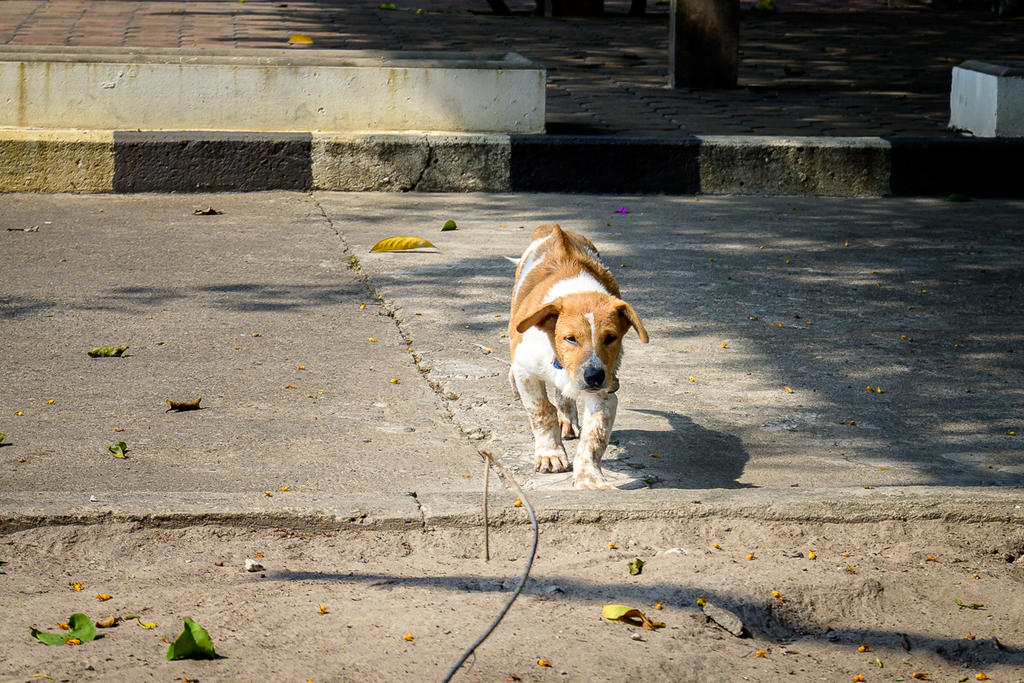 Post your Z50 images-doggy-1.jpg