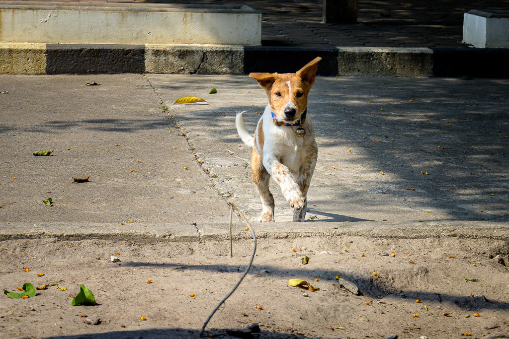 Post your Z50 images-doggy-2.jpg