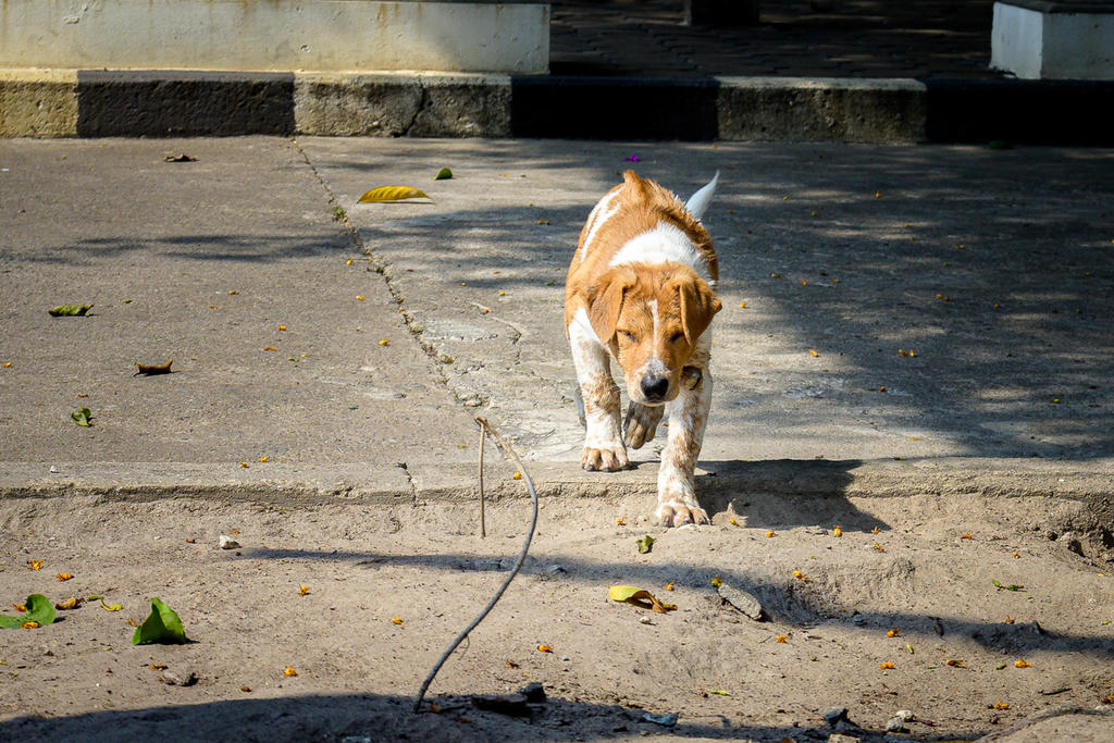 Post your Z50 images-doggy-3.jpg