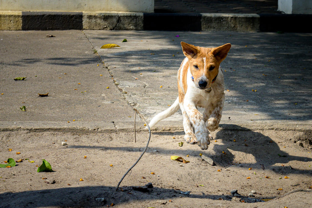 Post your Z50 images-doggy-4.jpg