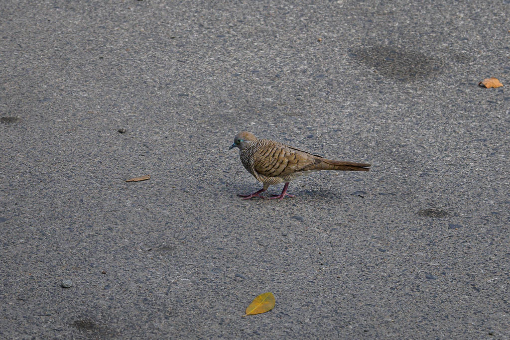 Post your Z50 images-birdy-walk-1-2.jpg