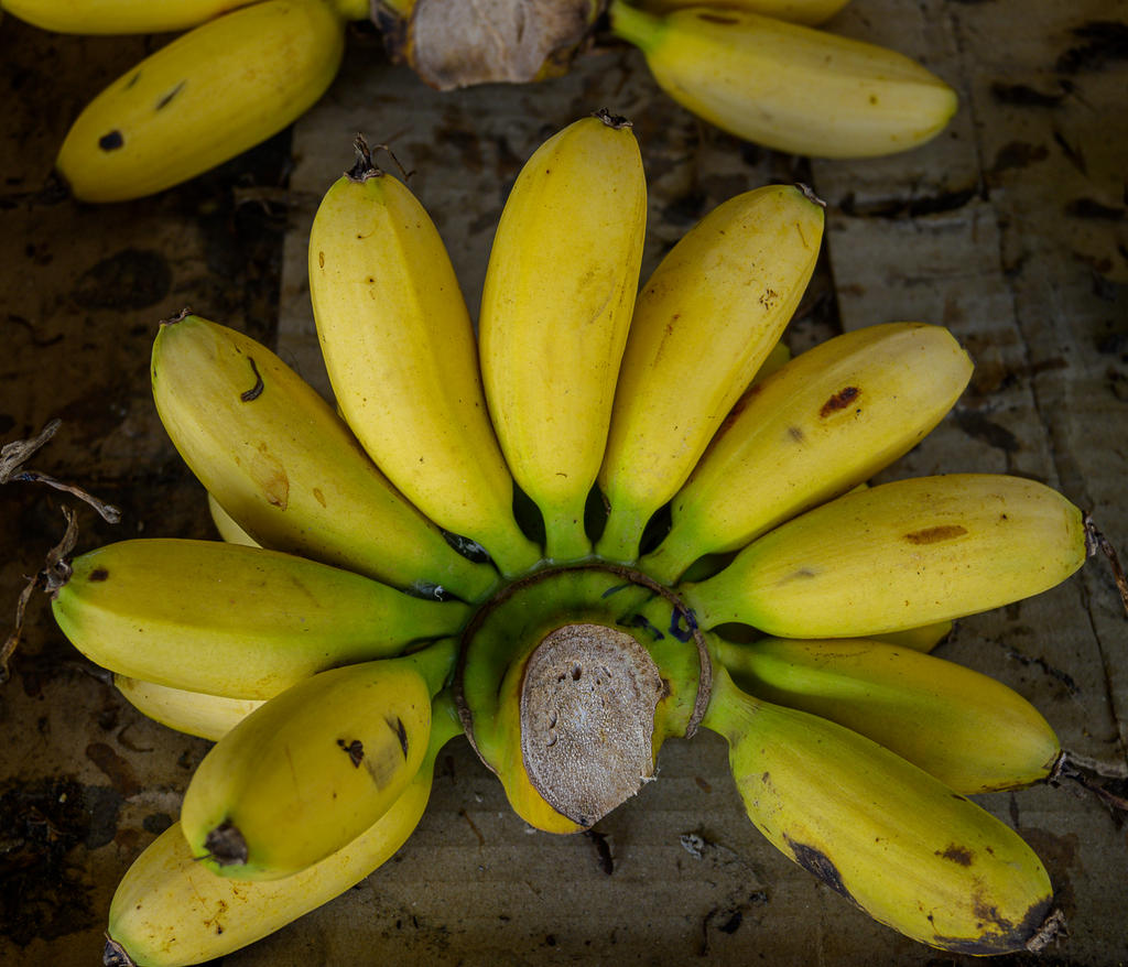 Post your Z50 images-bananas-1.jpg