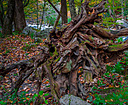 Medusa of the Woods by Alan A in Member Albums