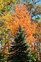 fall foliage 2 by Art Gaudio in Member Albums
