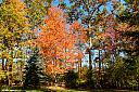fall foliage 3 by Art Gaudio in Member Albums