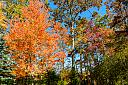 fall foliage 4 by Art Gaudio in Member Albums