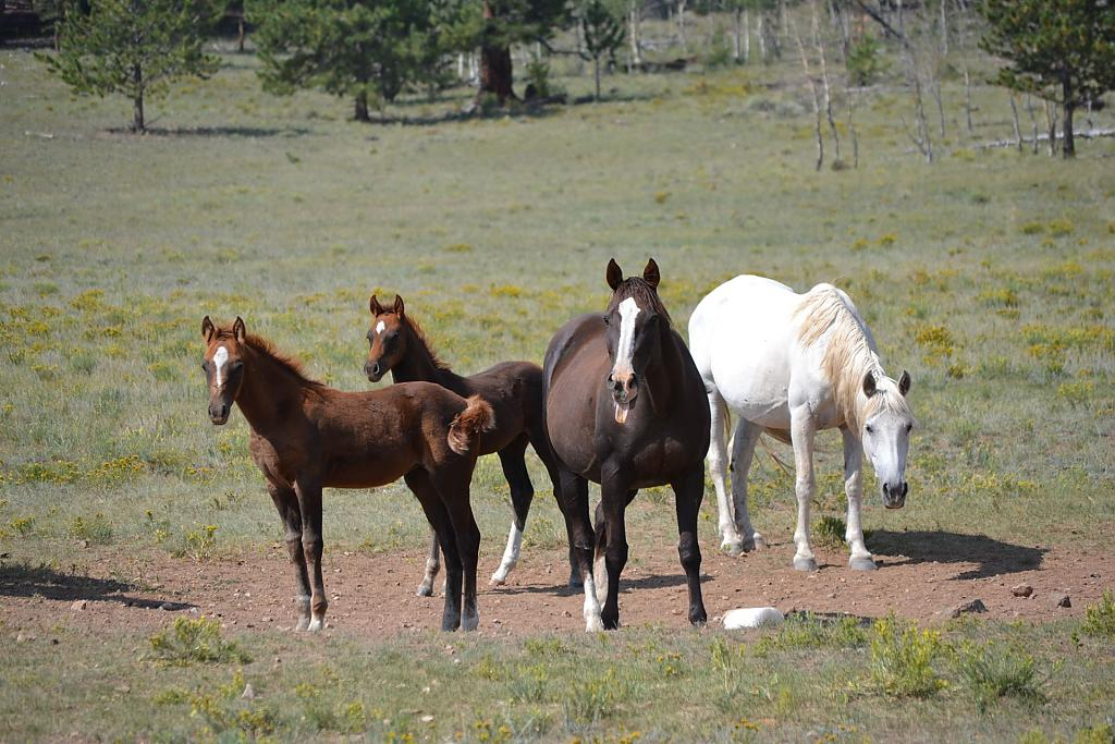 Horses by Rancher in Member Albums