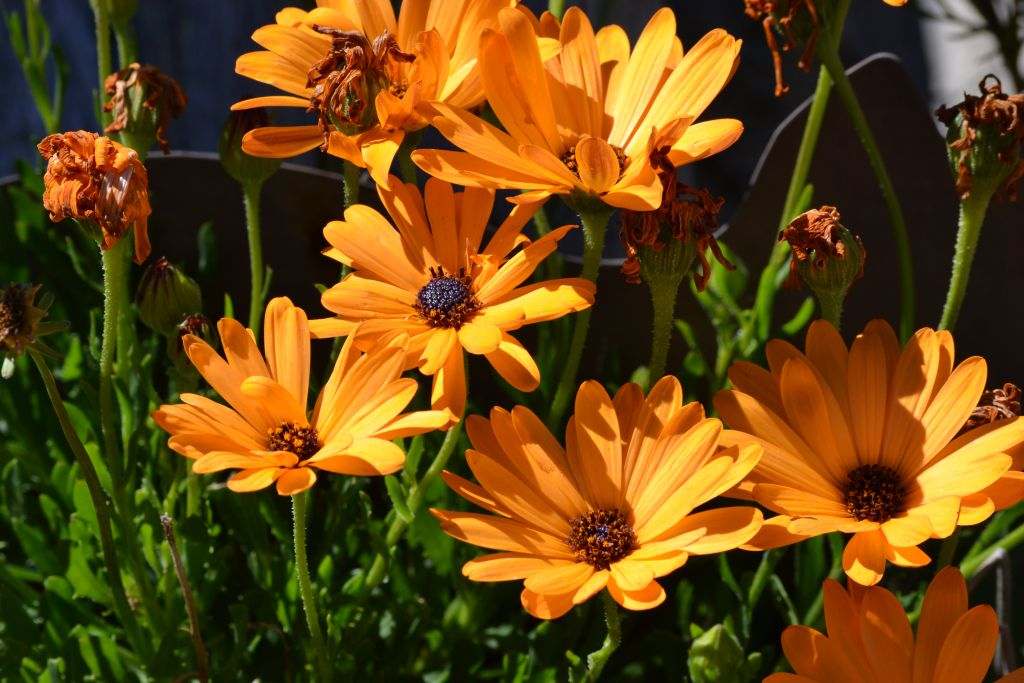 Yard flowers by Rancher in Member Albums