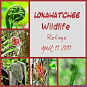 Loxahatchee Collage