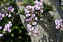 Orchid by Marilynne