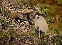 Great Blue Heron and Anhinga by Marilynne in Wildlife