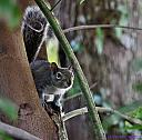 Squirrel by Marilynne in Critters