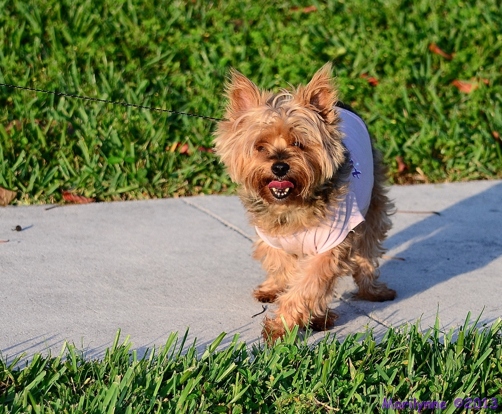 Princess by Marilynne in Pets