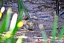 Squirrel by Marilynne