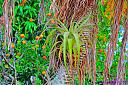 Air Plant and Tangerines by Marilynne