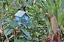 Bird House by Marilynne in Yard Art