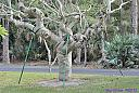 Ghostly Tree by Marilynne in Plants
