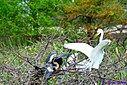 Great Egret Anhinga by Marilynne in Wildlife