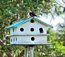 Purple Martin House by Marilynne in Wildlife