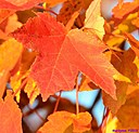 Autumn leaves by Marilynne in Landscape