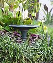 Bird Bath by Marilynne in Landscape