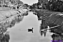 Canal by Marilynne