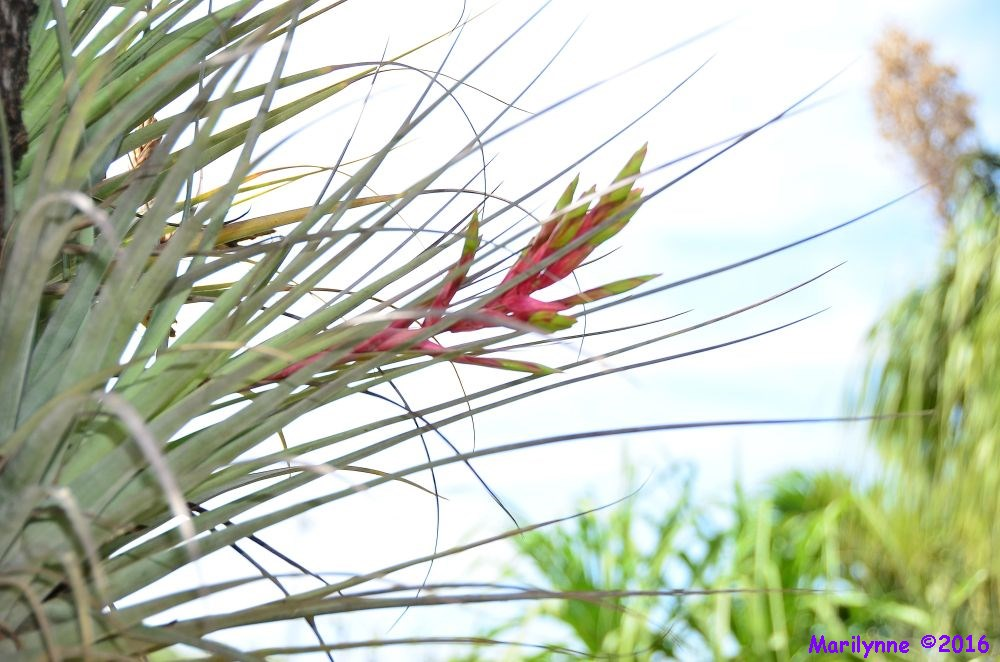 Air Plant by Marilynne in Plants