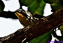 Yellow Throated Warbler by Marilynne in Wildlife