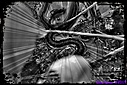 Brown Banded Water Snake by Marilynne in B/W