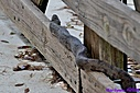 Brown Water Snake by Marilynne in Critters