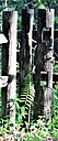 Fence Post by Marilynne in Landscape