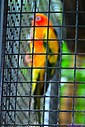 Parrot by Marilynne in Almost