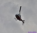 Helicopter by Marilynne in Wildlife